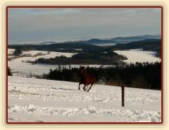 Koně běží k senu