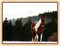 Vikina, v pozadí kopce v mlze
