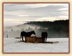 Hřebci u sena, kopce v mlze