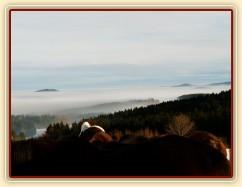 Koně u seníku s výhledem na mlhu