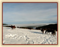 Koně bloumají po výběhu, výhled v mlze