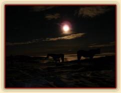 Koně čekají na večeři, svítí měsíc, v údolí je mlha