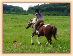 Ze začátku Vikina na vyjížďkách projevovala svou náladu, hlavně když jí člověk nechtěl nechat běžet:-)
