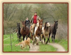 Duben 2010, Viki zvládá i odvedení stáda na pastvu:-)