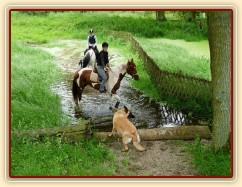 Červen 2010, trénink crossu v Pecínově, koně s vodou problém nemají, ale psa by tam člověk nedostal:-)