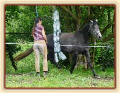 Kasira při práci ze země - prochází mezi zavěšenými pet lehvemi