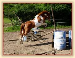 Mikey skáče ve volnosti