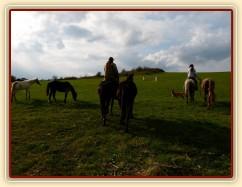 Květen 2010, odvádění stáda hřebců na pastviny, Grant neměl problémy s voděním dalších koní