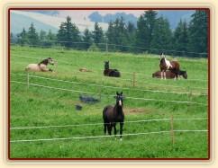 Červenec 2010, bohaté pastviny v Čeleticích