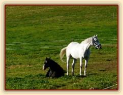 Říjen 2010, Grant a jeho nová spolubydlící na pastvině
