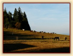Listopad 2010, naše 3 stáda, vzadu vlevo Grant