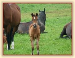 Červenec 2010, koně spí, ale hříbě je zvědavé:-)