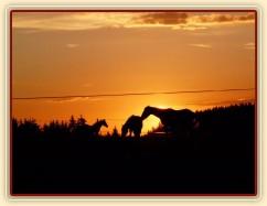 Červenec 2010, Gimli, Galen a Chuezca při západu slunce