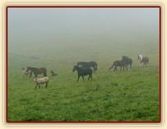 Srpen 2010, stádo v mlze