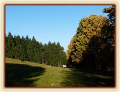 Říjen 2010, hřebci a jejich pastvina se stoletými javory