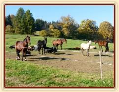 Říjen 2010, stádo odpočívá