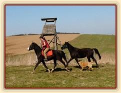 Jaro 2010, Carthago jde na laně za Grantem na vyjížďku
