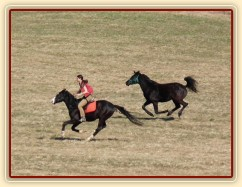 Jaro 2010, Carthago závodí s Grantem na vyjížďce