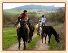 Duben 2010, odvádění stáda hřebců na pastviny