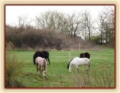 Duben 2010, stádo hřebců na pastvině