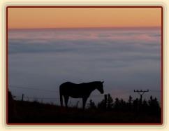Listopad 2010, Carthago v zimním výběhu, ranní mlhy