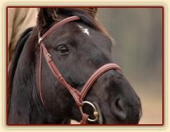 Carthago pozoruje ostatní koně, foto Olga Procházková