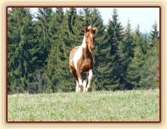 2.4.2011 - První vypuštění koní na pastvu, Vikina byla nejakčnější...