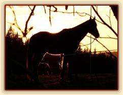 2.4.2011 - První vypuštění koní na pastvu, západ slunce
