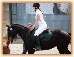Carthago na opracovišti, pomalu se dostavuje soustředění i mezi cizími koňmi...