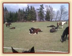 7.4.2011 - Siesta na jarní pastvině