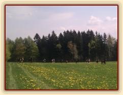 25.4.2011 - Vypuštění koní na novou pastvinu o velikosti 3 ha