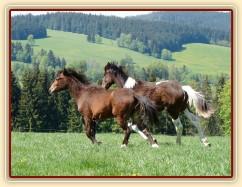 Ročci dovádí na pastvině