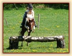 Vikina skáče přes březový oxer na našich pastvinách