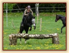 Jared skáče přes březový oxer na našich pastvinách