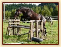 Monty skáče řadu ve volnosti