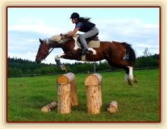 Nový velký oxer (110 x 120 cm) a Vikina při prvním skoku přes něj