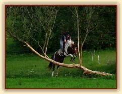 """Vikina a """"průskok"""" stromem. Zatím jeden z nejtěžších terénních skoků u nás, skok je vysoký něco přes metr. Místo, kam se člověk musí trefit, je široké 1,5 metru:-)"""