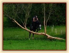 """Jared a """"průskok"""" stromem. Zatím jeden z nejtěžších terénních skoků u nás, skok je vysoký něco přes metr. Místo, kam se člověk musí trefit, je široké 1,5 metru:-)"""