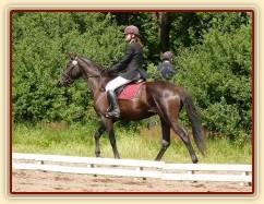 Arwen před drezurní úlohou při závodech všestrannosti