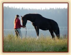 Stoupnutí na špalek - oblíbený cvik všech koní:-)