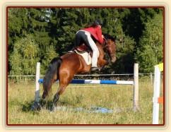 """Bára při skokovém tréninku, skok přes """"vodu"""", začátek října 2011"""