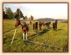 1.10.2011 - Stádo klisen, koně jsou zvědaví, jestli jim neneseme něco na zub:-)