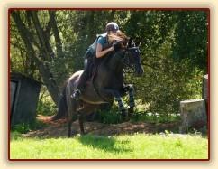 Arwen a výskok, Crossový trénink v Borové 29.8.