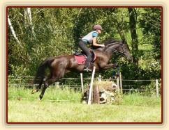 Arwen a skok přes kamenou zídku, Crossový trénink v Borové 29.8.