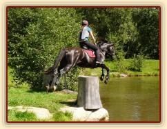 Arwen a seskok do rybníka, Crossový trénink v Borové 29.8.