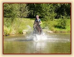 Arwen kluše vodou v rybníce, Crossový trénink v Borové 29.8.