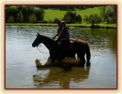 Arwen a Carthago po práci v rybníce, Crossový trénink v Borové 29.8.
