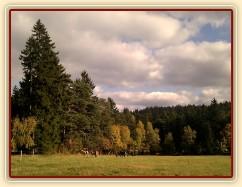22.10.2011 - Podzim už je v plném proudu, stádo hřebců