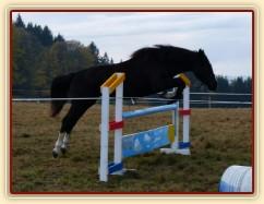Dvouletá klisna Kroona, Irský sportovní kůň, poprvé skáče metrové skoky