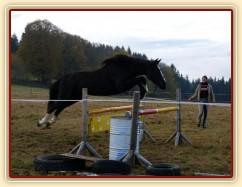 Dvouletá klisna Kroona, Irský sportovní kůň, poprvé skáče metrové skoky, odraz trochu nevyšel:-)